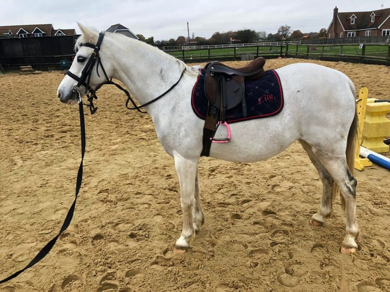 ava pony for sale